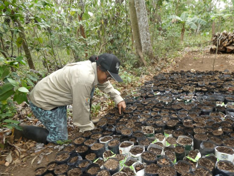 Tree Seedlings