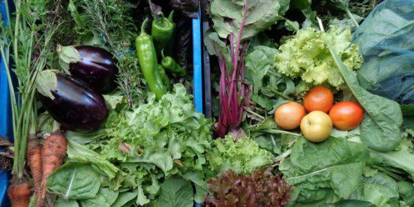 food-veggies-4-1024x768